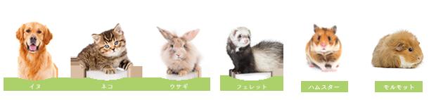イヌ、ネコ、ウサギ、フェレット、ハムスター、モルモット