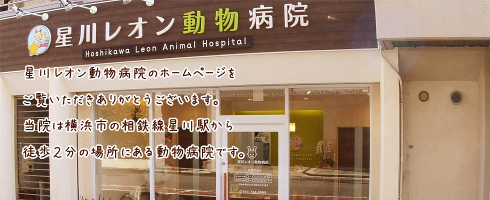 星川レオン動物病院1